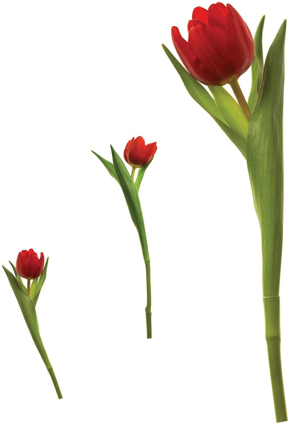 Roommates Tulip Appliques Wall Decals